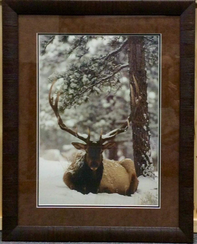 Samson By Scott Pope Wild Spirits Art Gallery In Estes Park